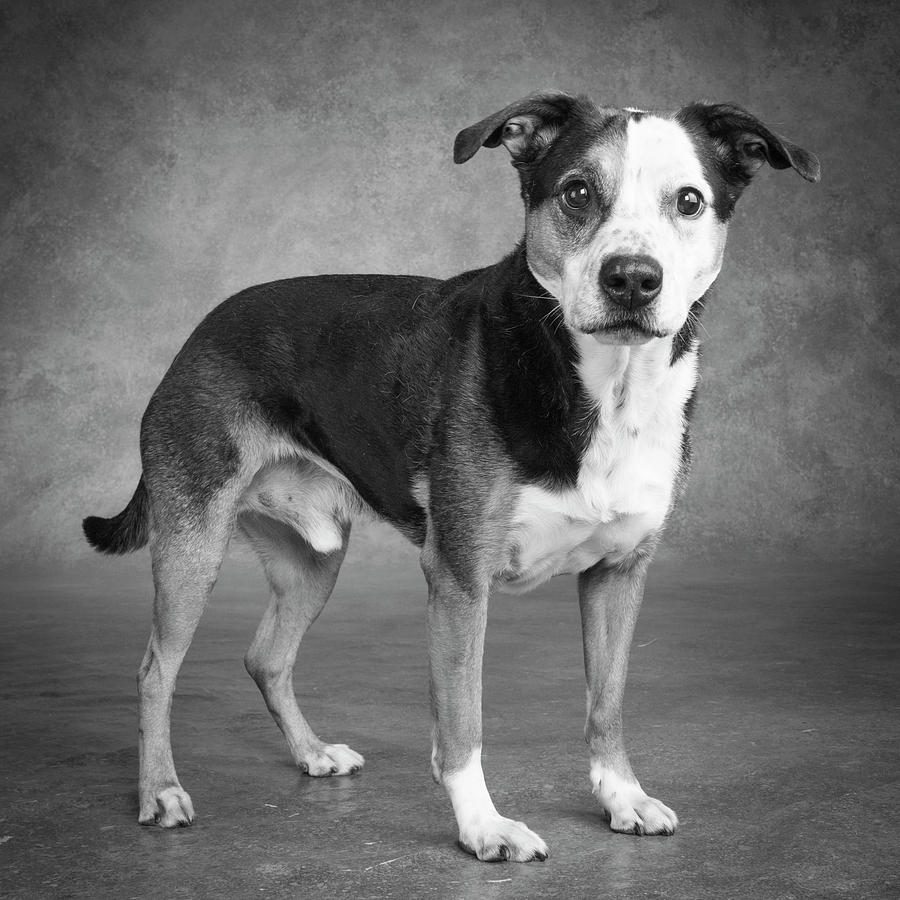 Horizontal Photograph - Portrait Of A Mixed Dog by Panoramic Images