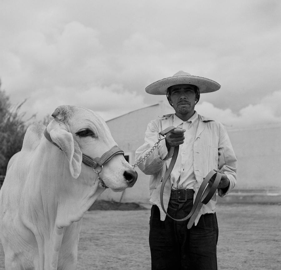 Ranching In Michoacan, Mexico Photograph by Michael Ochs Archives
