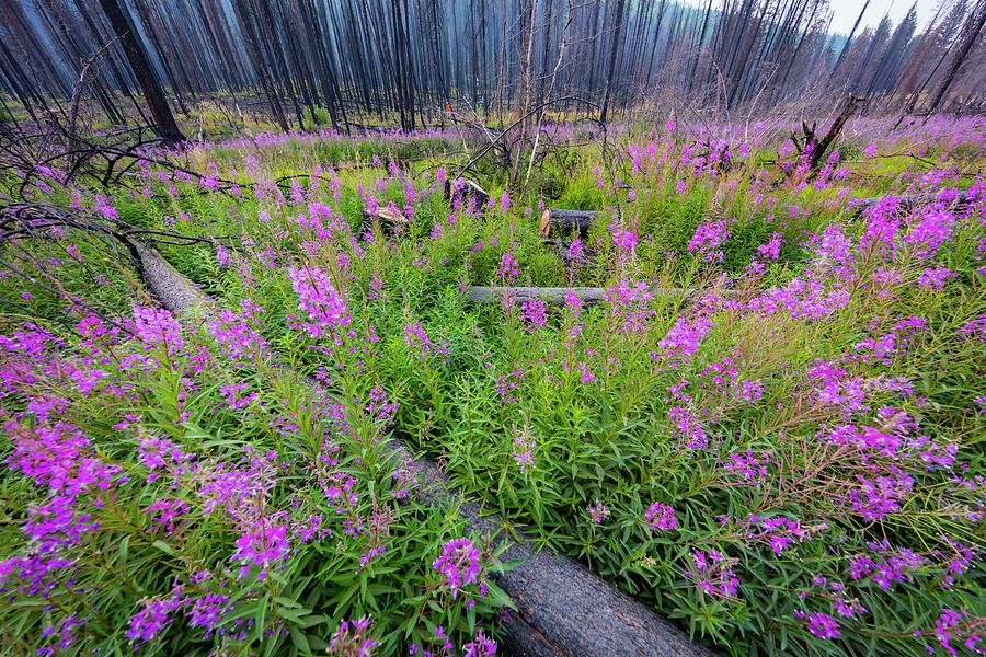 Blue Photograph - Usa, Montana, Missoula by Jaynes Gallery
