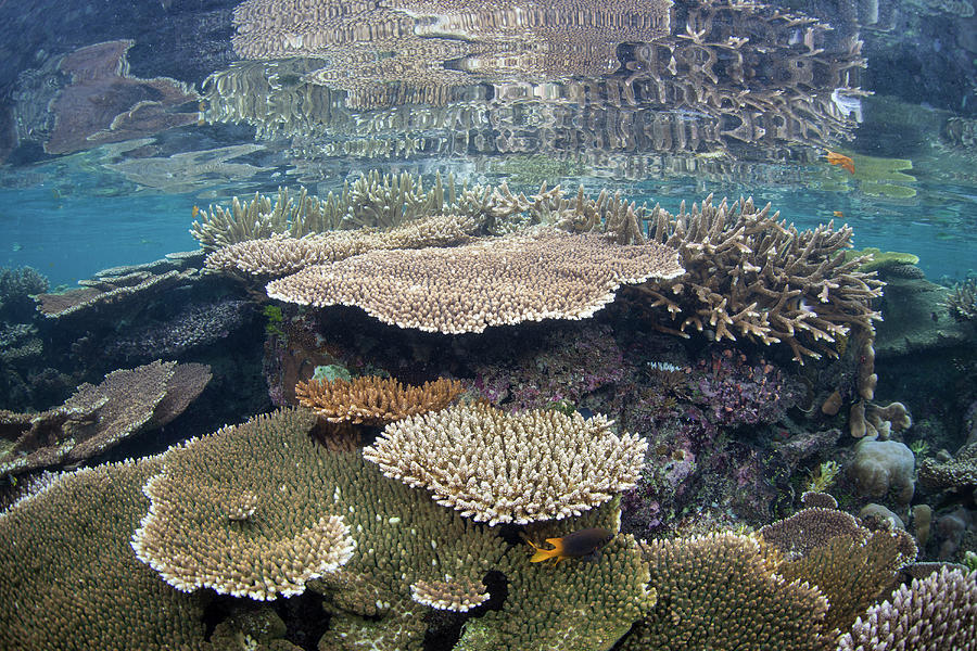 A Beautiful Coral Reef Thrives by Ethan Daniels