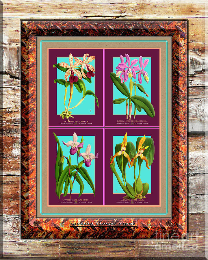 Antique Orchids Quatro On Rusted Metal And Weathered Wood Plank Digital Art