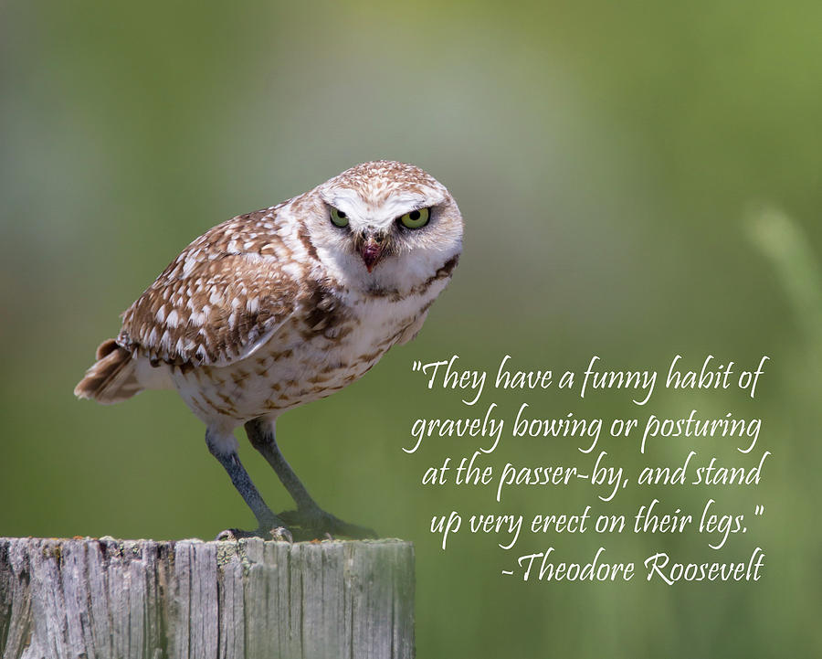 Burrowing Owl with Quote by Michael Chatt