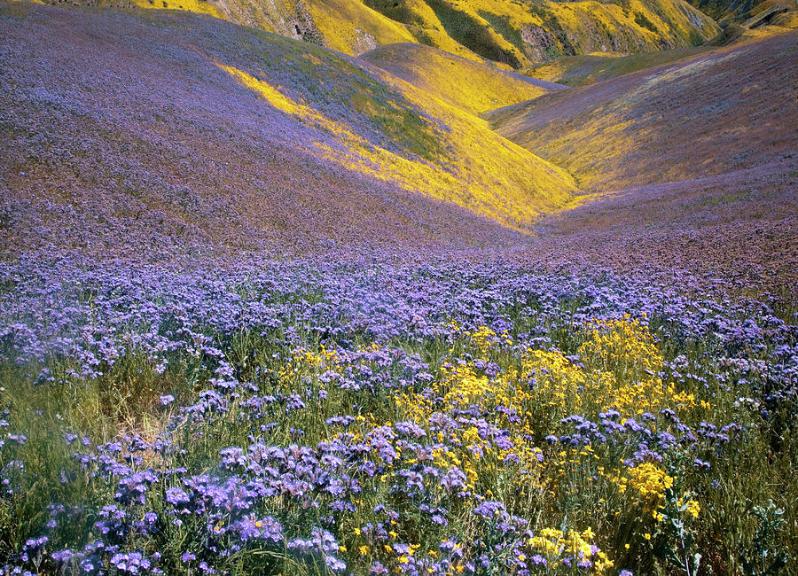 Blossom Photograph - Usa, California, Carrizo Plain National by Charles Gurche