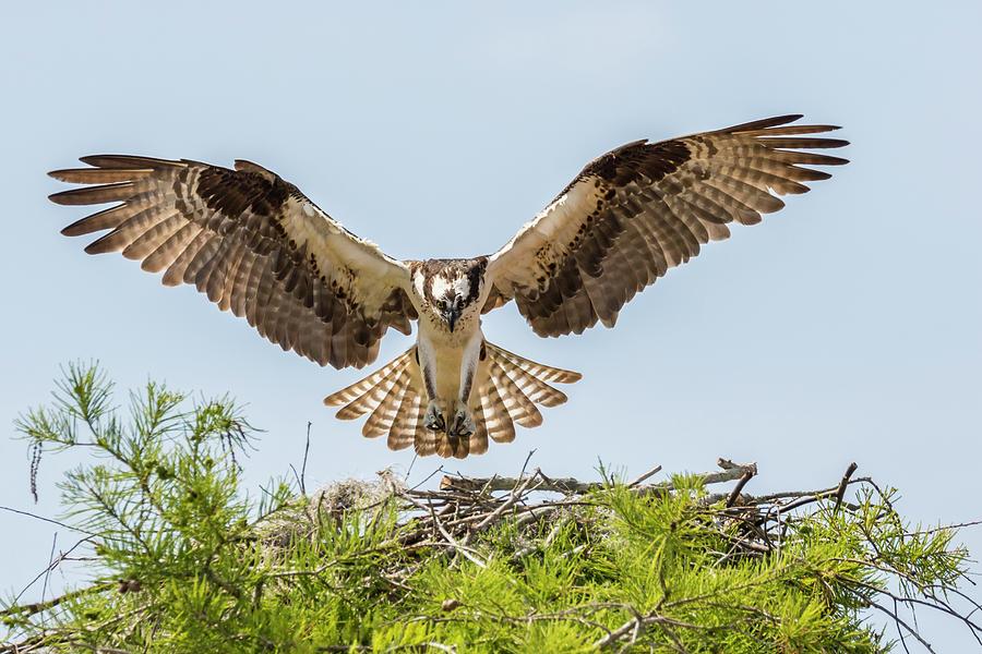 Animal Photograph - Usa, Louisiana, Atchafalaya National by Jaynes Gallery