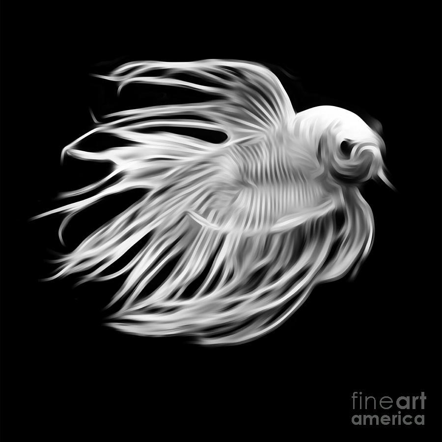 White Betta Fish Fighting Fish Isolated On Black Background Digital Art By Saranyaphach Jitpilai