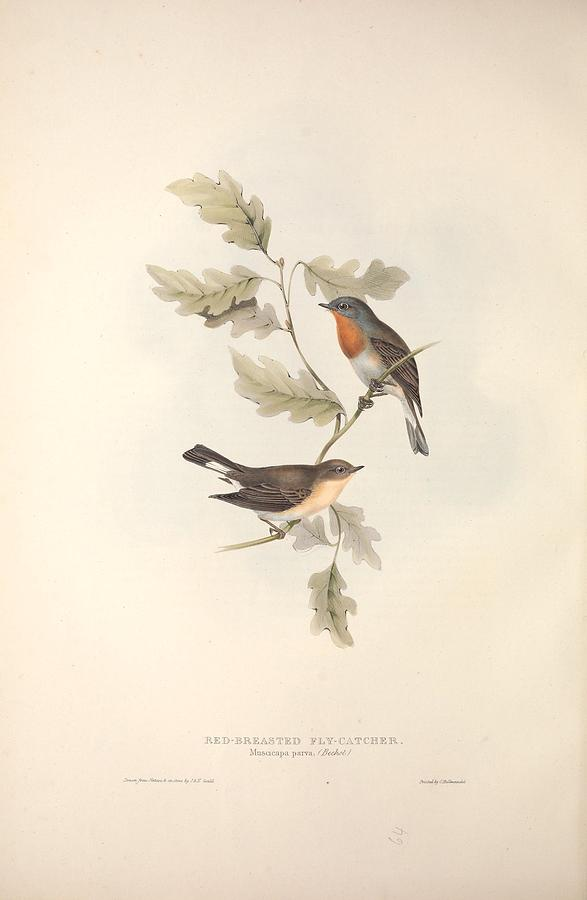 Nature Painting - Different Types Of Birds Illustrated By Charles Dessalines D Orbigny 1806-1876 21 by Charles Dessalines D Orbigny