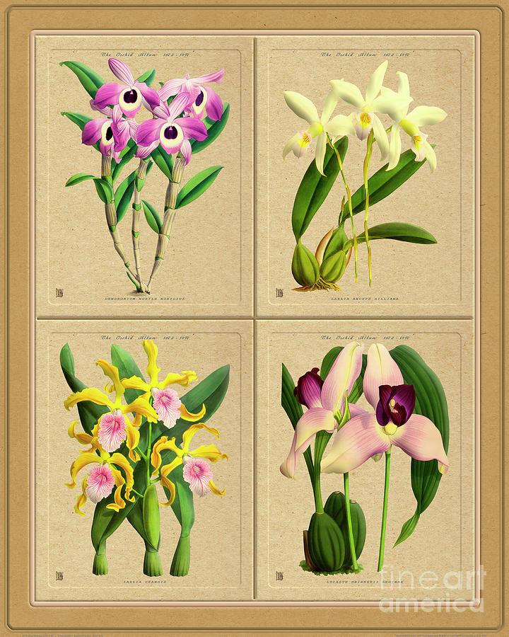 Orchids Quatro Classic Collage Mixed Media
