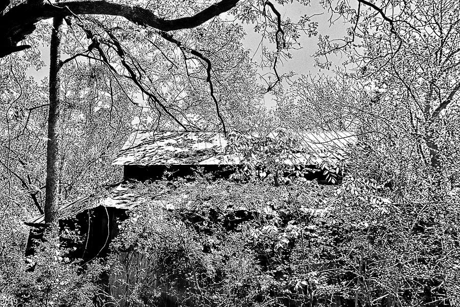 A Barn Among The Trees Black And White by Lisa Wooten