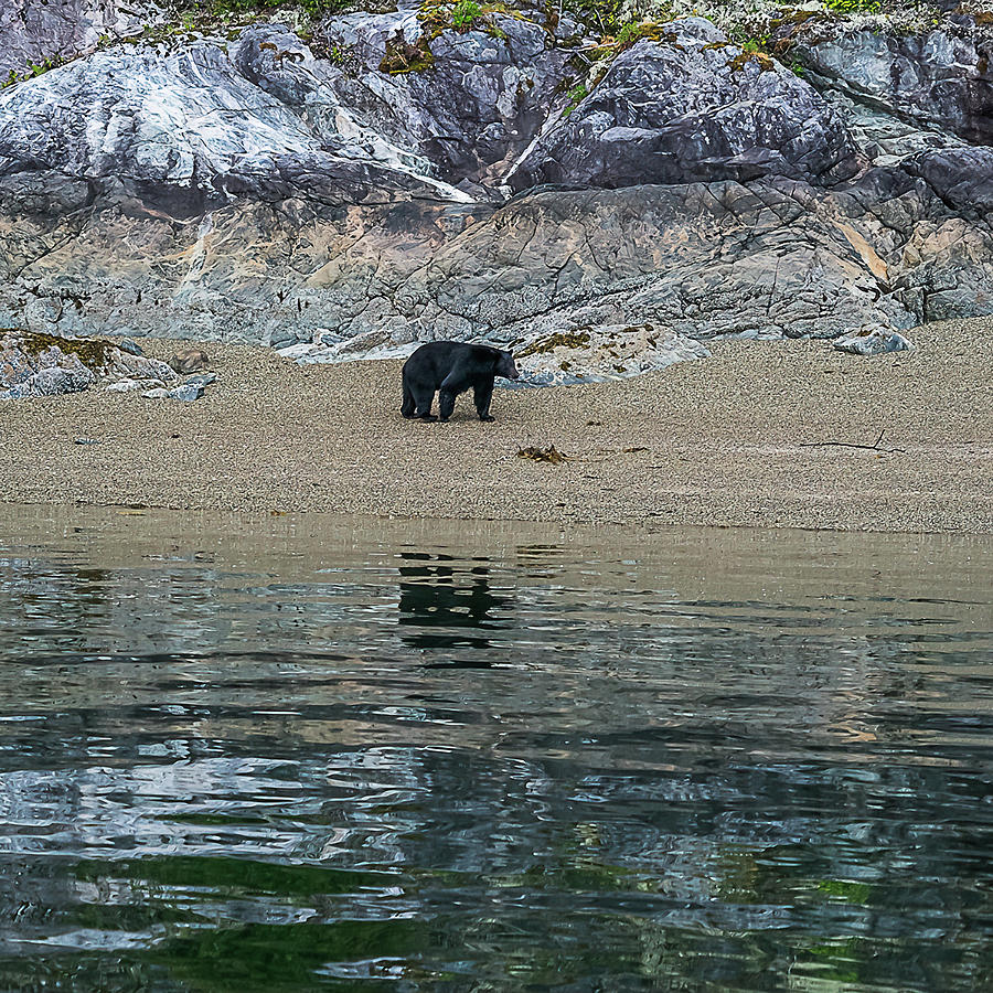A bear's reflections by Peggy Blackwell