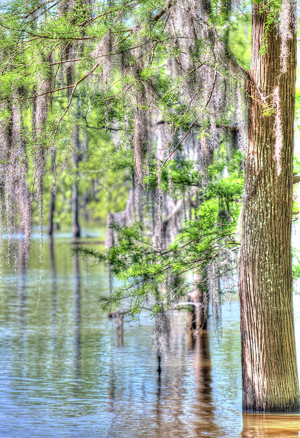 Bayou Photograph - A Beautiful Day In The Bayou by Ester McGuire