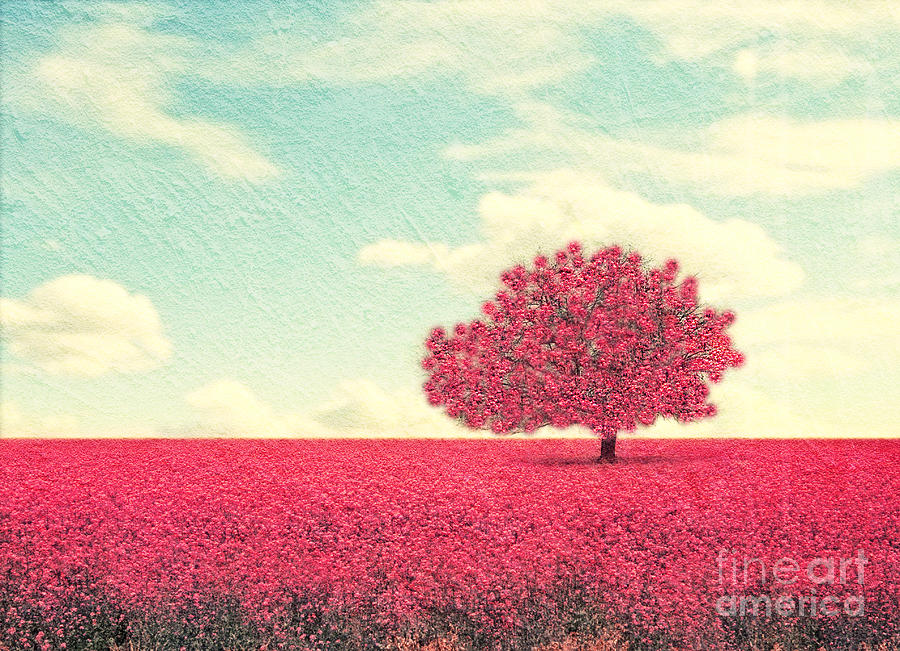 Beauty Photograph - A Beautiful Tree In A Pretty Field by Annette Shaff