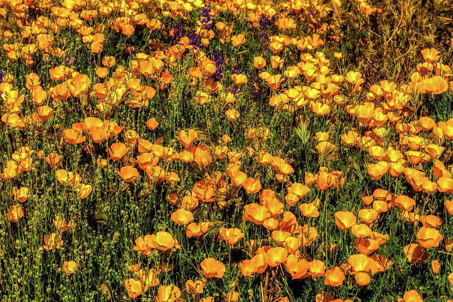 A Bed of Gold by Rick Furmanek