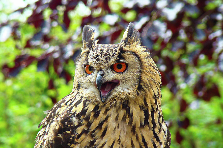 A big shout from the Owl by Darren Weeks