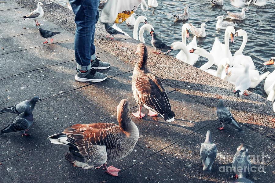 A bird market  by Marina Usmanskaya