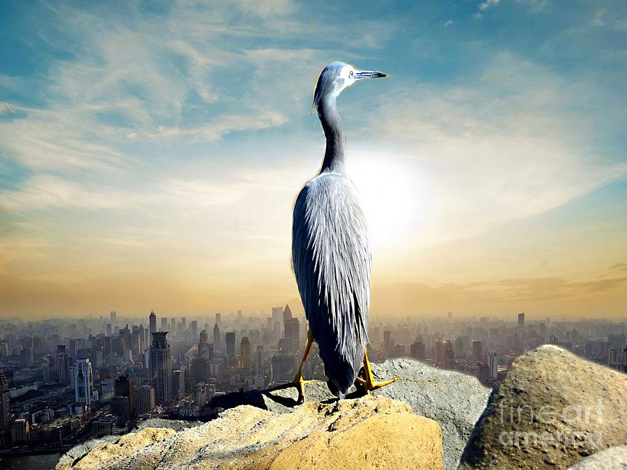 A Bird's Eye View. by Trudee Hunter