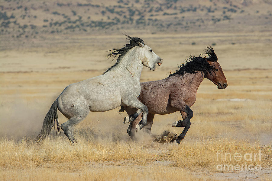 Nikon Photograph - A Biting Chase  by Nicole Markmann Nelson