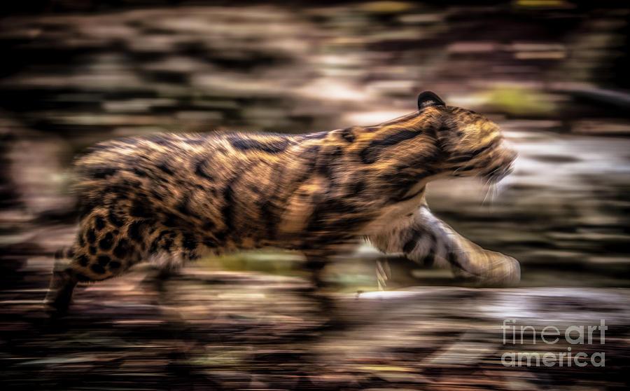 A blur of a Cat by Julian Starks