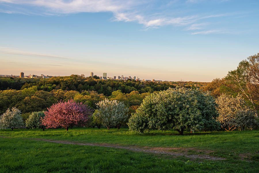 A Boston spring sunset from the Arnold Arboretum Jamaica Plain Boston Skyline Peters Hill by Toby McGuire