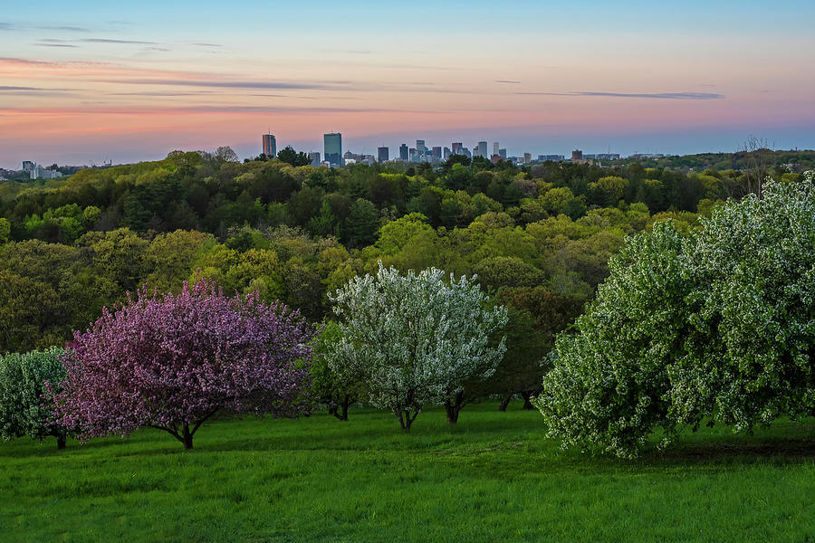 A Boston spring sunset from the Arnold Arboretum Jamaica Plain Boston Skyline by Toby McGuire