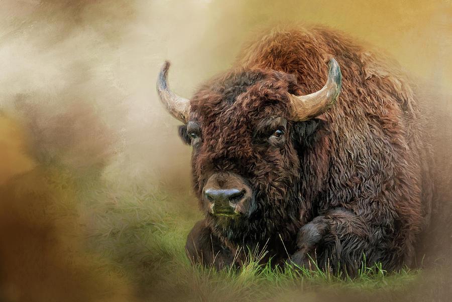 Buffalo Digital Art - A Buffalos Rest by Jeanette Mahoney