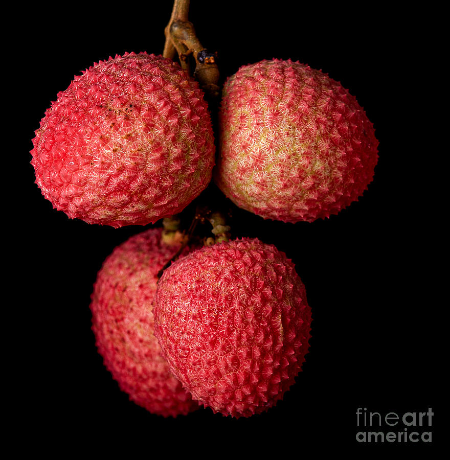 Pink Photograph - A Bunch Of Lychees Against A Black by Hein