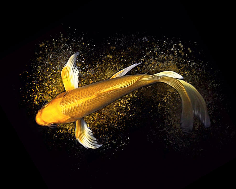 A Butterfly Orenji Ogon Koi Fish Digital Art By Scott Wallace Digital Designs