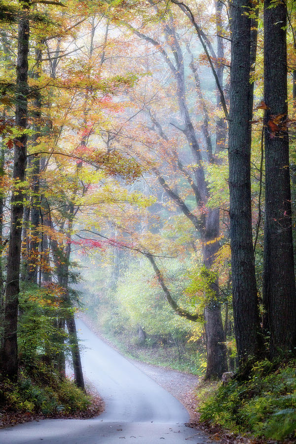 Appalachian Photograph - A Canopy Of Autumn Leaves by Lana Trussell