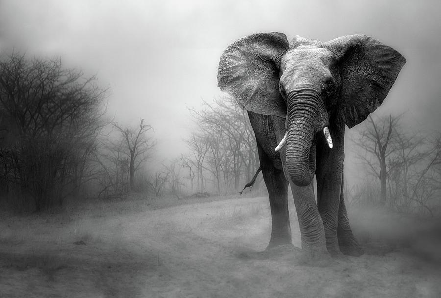 Elephants Photograph - A by Charlaine Gerber