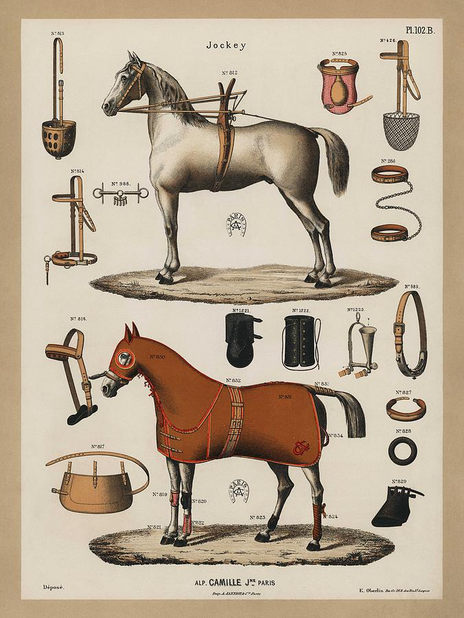 Horse Painting - A Chromolithograph Of Horses With Antique Horseback Riding Equipments   1890  by Celestial Images