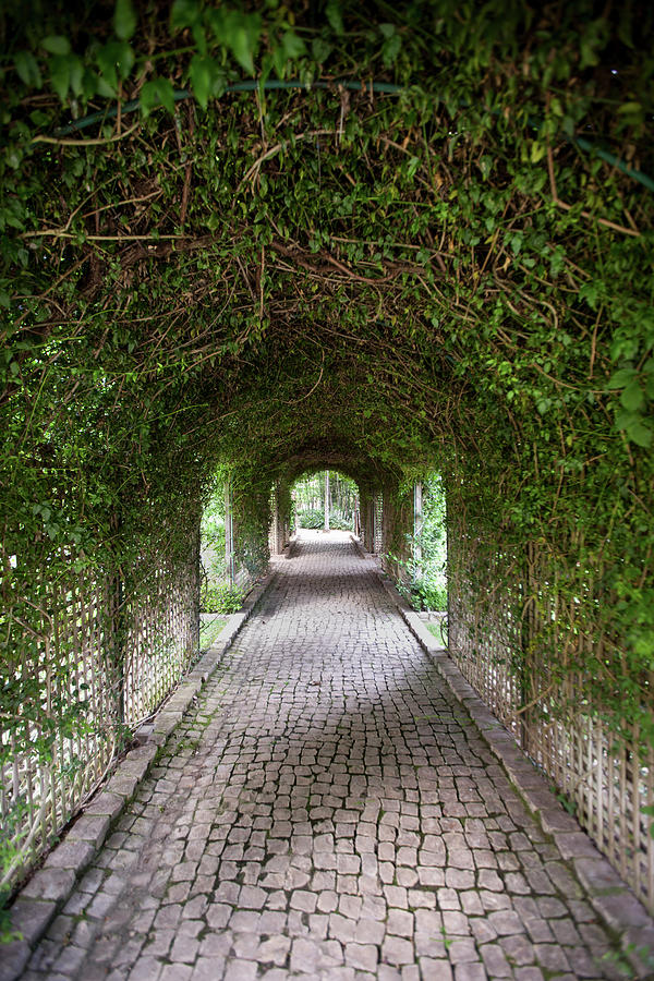 A Cobblestone Path And Vine-covered Photograph by Richard Ross