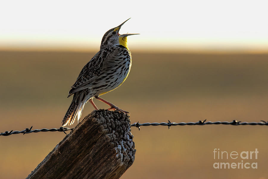 A Colorado Good Morning by Jim Garrison