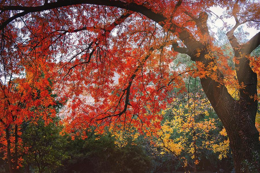 A Colorful Autumn Morning  by Saija Lehtonen