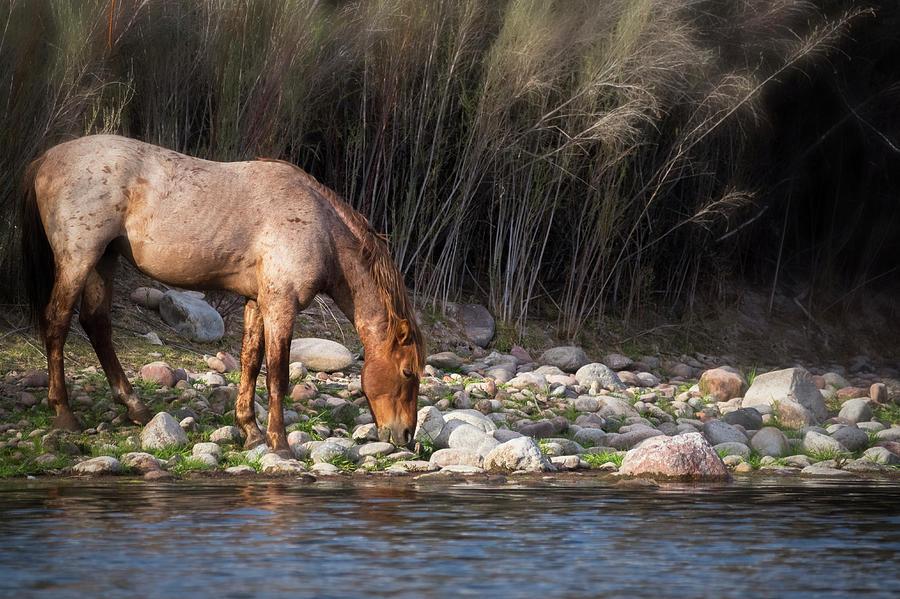 Wild Horses Photograph - A Cool Drink Riverside  by Saija Lehtonen