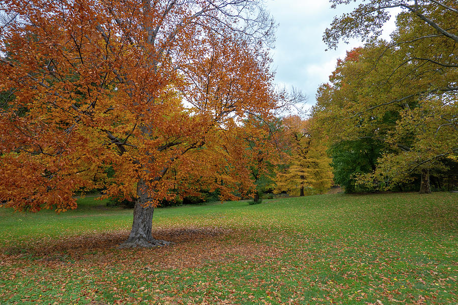 A Copper-Tone Tree by Cornelis Verwaal