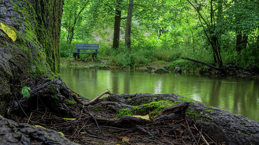 A Creek, A Tree and A Bench by Jason Fink
