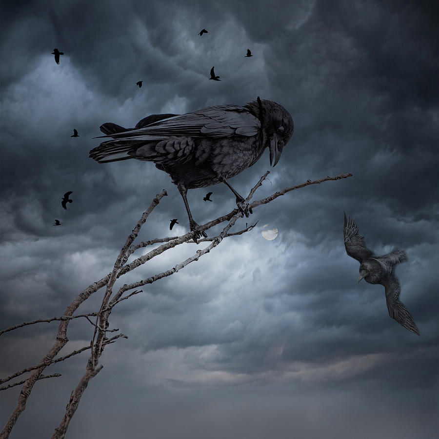 A Crows Life by Mike Gifford