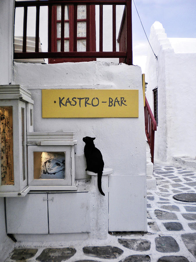 A Curious Cat in Mykonos by Marilyn MacCrakin