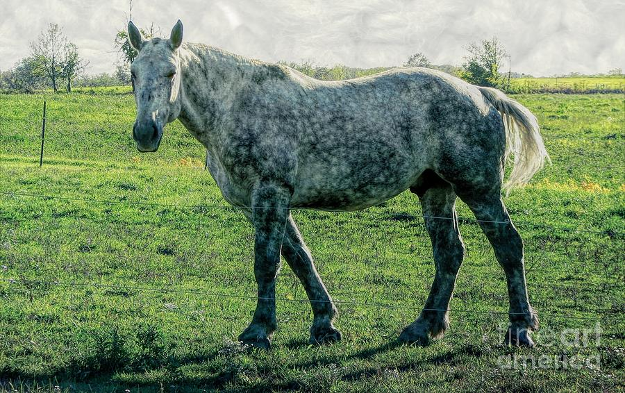 A Dappled Gray Colored Work Horse with Stormy Seas Effect  by Rose Santuci-Sofranko