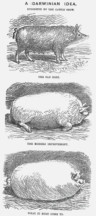 A Darwinian Idea, 1865. Artist Tw Woods Drawing by Print Collector