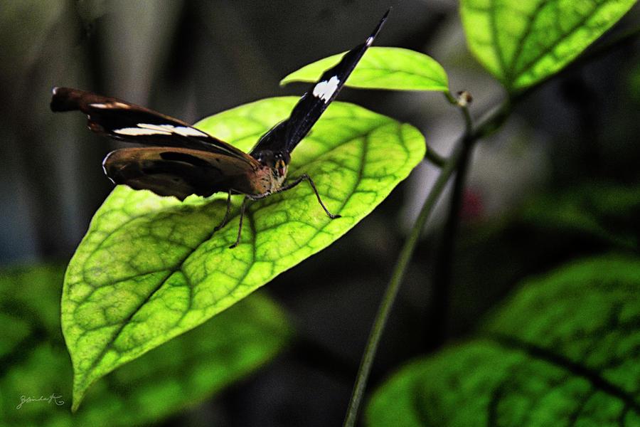 A defiant Butterfly by Gerlinde Keating - Galleria GK Keating Associates Inc