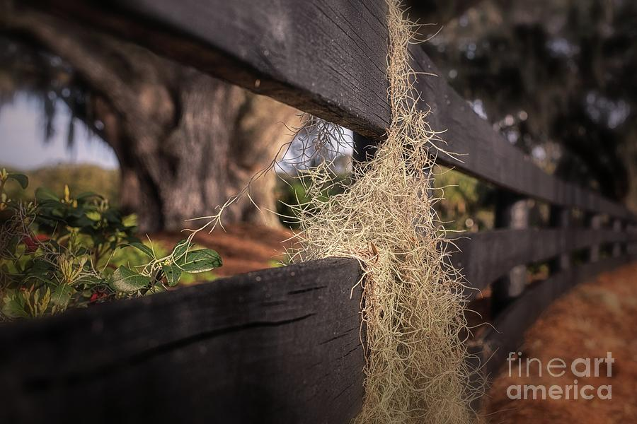 A Different Perspective by Mary Lou Chmura