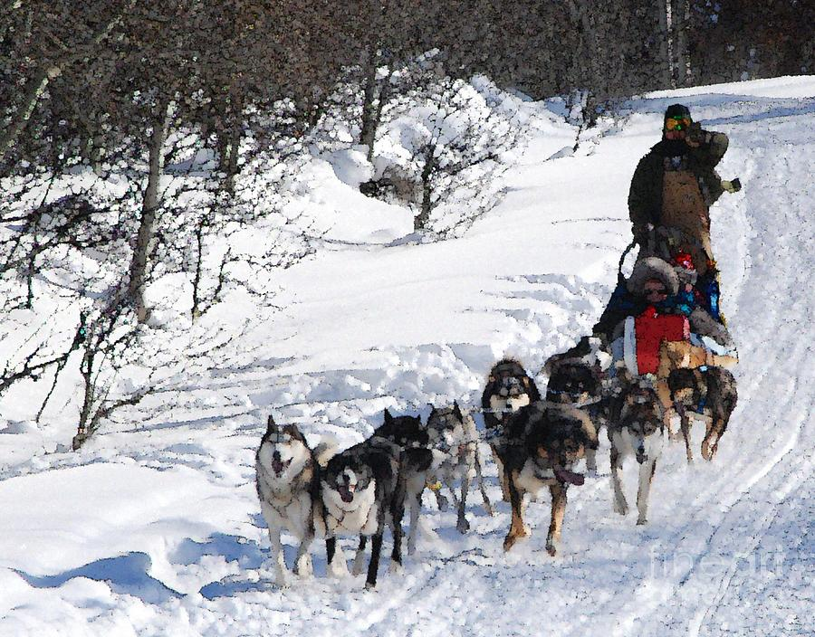 A Dog Sled Pulled by a Team of Ididirods in below Zero Temperatures. by Philip and Robbie Bracco