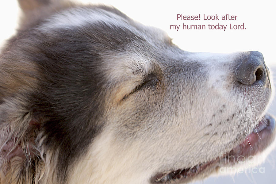 A Dog's Prayer by Carolyn Parker