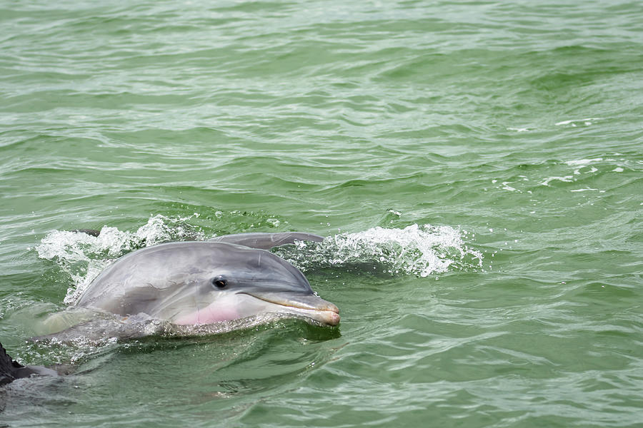 A Dolphin Hello Photograph