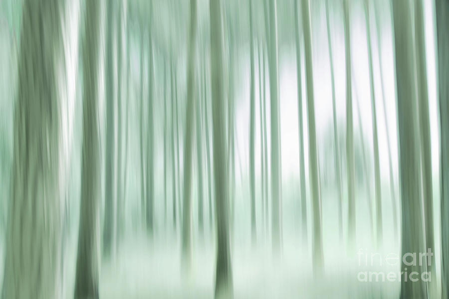 A Dreamy Forest by Hal Halli