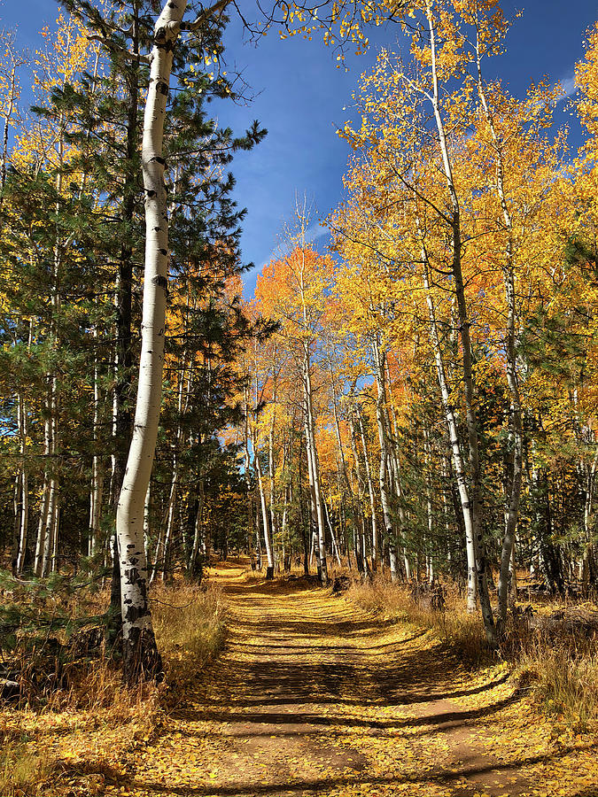 A Fall Drive Among the Aspens by TL Wilson Photography by Teresa Wilson
