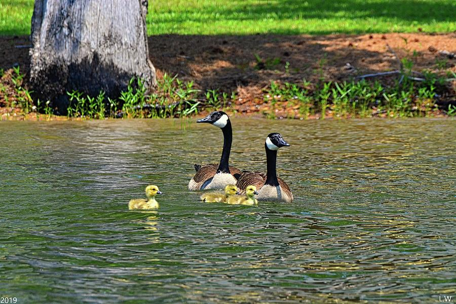 A Family Of Geese by Lisa Wooten
