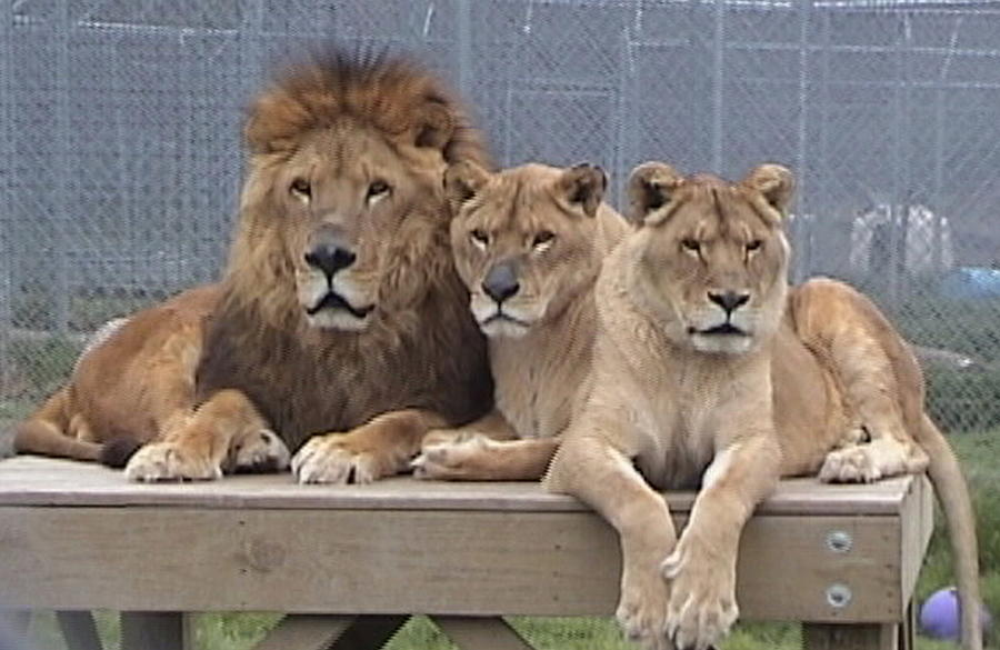 A Family Portrait by Barbara Keith