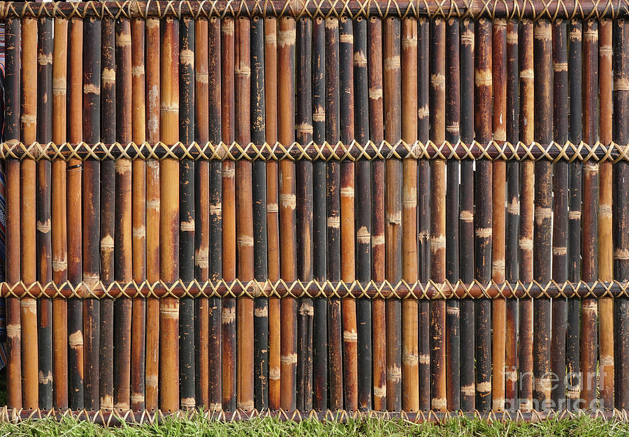 A Fence Made of Bamboo by Yali Shi