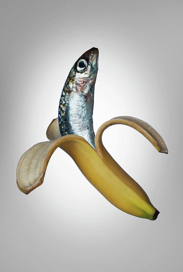 A Fish In A Banana Photograph by Buena Vista Images